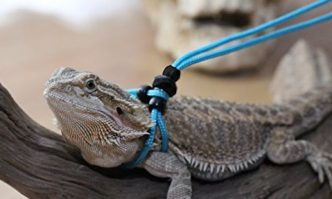 Adjustable Reptile Leash by My Reptile Rocks
