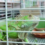 Best Iguana Cage