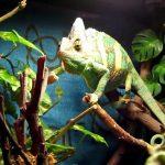 Best Chameleon Cage