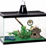 Best Crested Gecko Cage