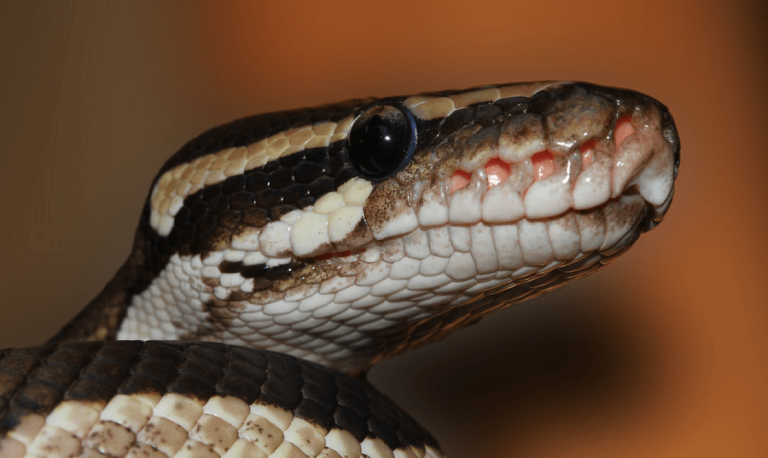 Top 10 Best Light for Ball Python: Reviews & Guide 2019 - My Life Pets