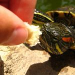 Best Food for Red Eared Slider