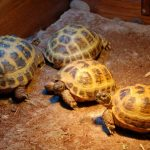 Best UVB Bulbs for Tortoise