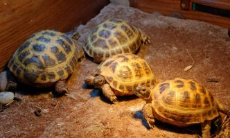 Best UVB Bulbs for Tortoise