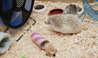 Best Hedgehog Cage