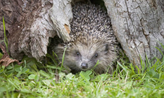 Best Hedgehog House