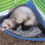 Best Litter & Litter Box for Ferrets