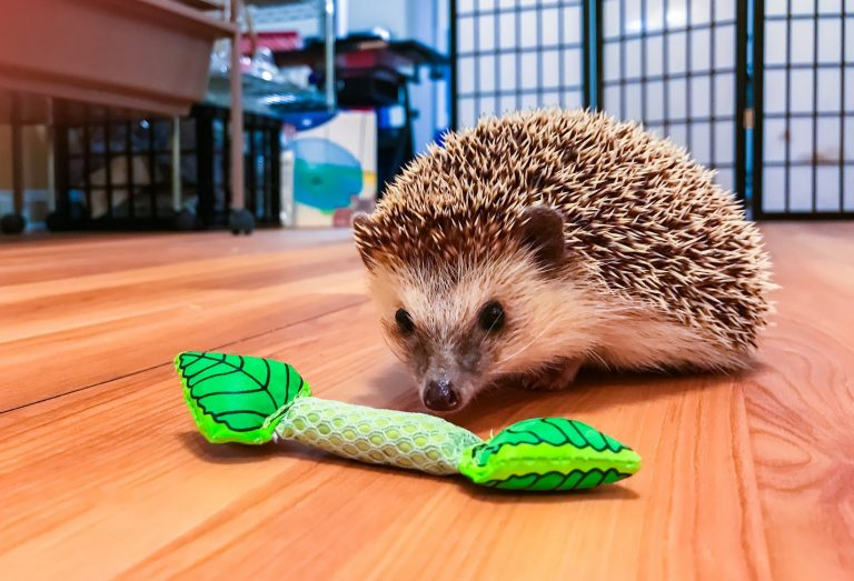 Top 18 Best Toys For Hedgehogs Reviews 2019 My Life Pets