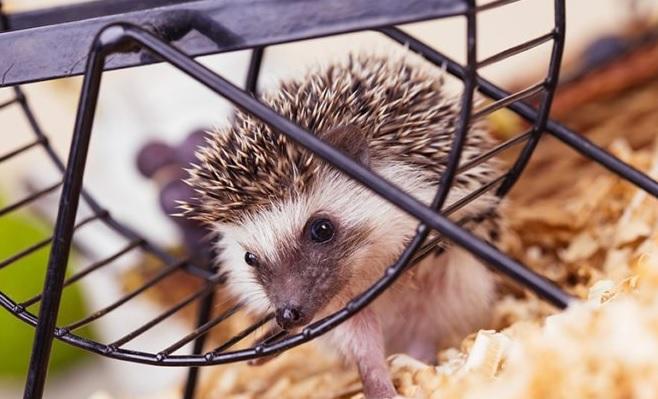 The 10 Best Hedgehog Wheel Reviews 2019 My Life Pets