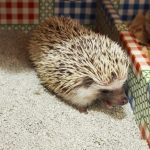 Litter for Hedgehogs
