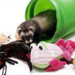 Best Ferret Toys