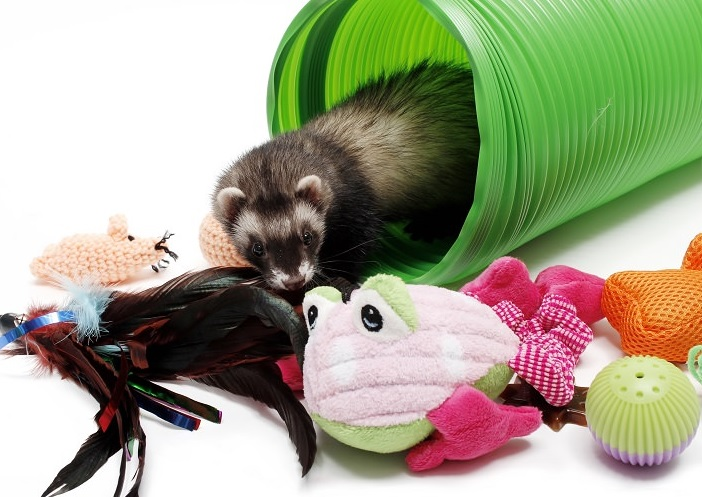 Top 10 Best Ferret Toys That You Can Buy Reviews 2019