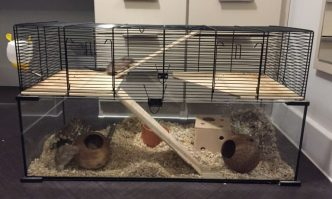 Best Gerbil Cages