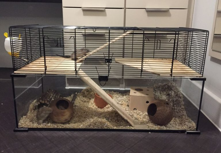 Top 10 Best Gerbil Cages Guide Amp Reviews 2019 My Life Pets