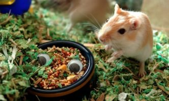 Best Gerbil Food