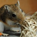 Best Gerbil Toys & Wheel