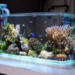 Saltwater Fish Tanks