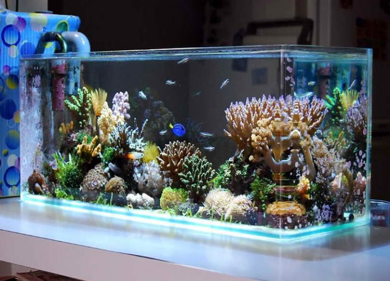 The 15 Best R Fish Tanks 2019