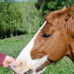 Horse Vitamin and Mineral Supplement