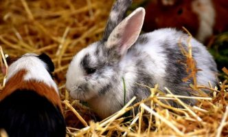 Bedding for Rabbits