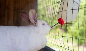 Best Water Bottle for Rabbits