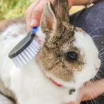 Brush for Rabbits