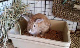 Litter Box For Rabbits
