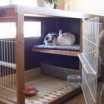 Best Indoor Rabbit Hutch