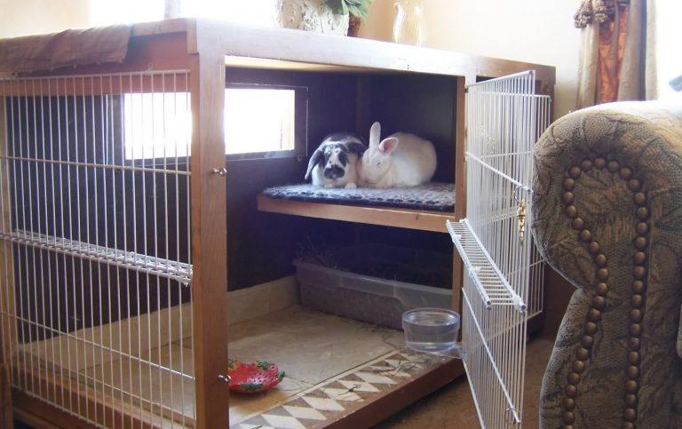 Pet Rabbit Indoor