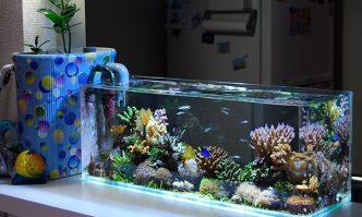 Best Saltwater Aquarium Filter