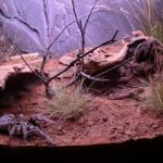 Best Tarantula Enclosures