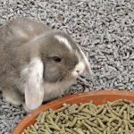 Rabbit Litter Odor Control