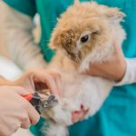 Best Nail Clippers for Rabbits