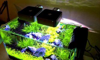 Led Lights for Planted Aquarium