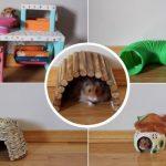 Best Toys For Hamster