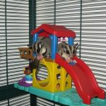 Best Toys For Sugar Gliders