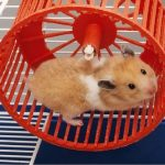 Best Wheels For Hamsters