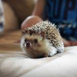 Best Heat Lamp for Hedgehog