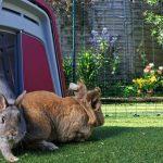 Best Outdoor Rabbit Hutch