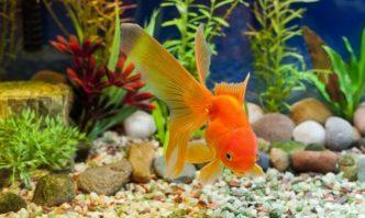 best aquarium gravel